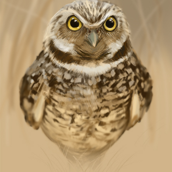 Thumb owl low res