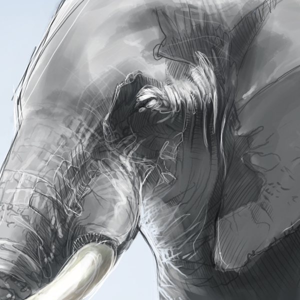 Thumb elephant detail