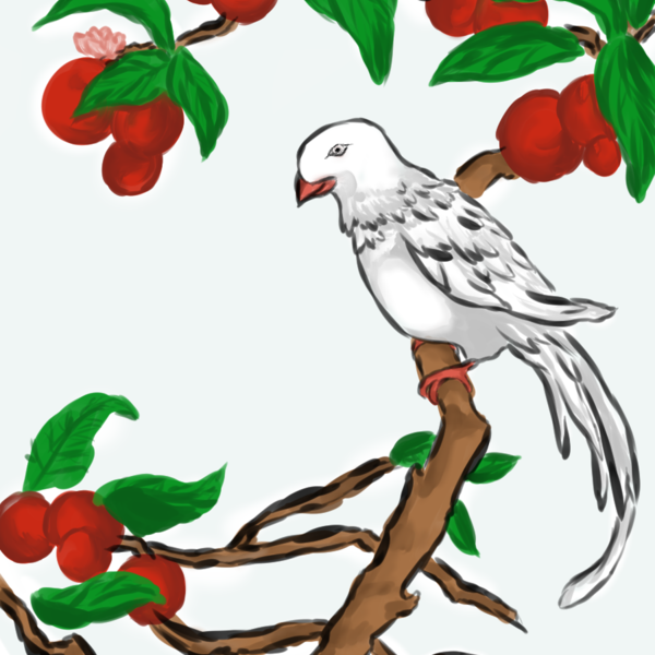 Thumb white feathers red fruit